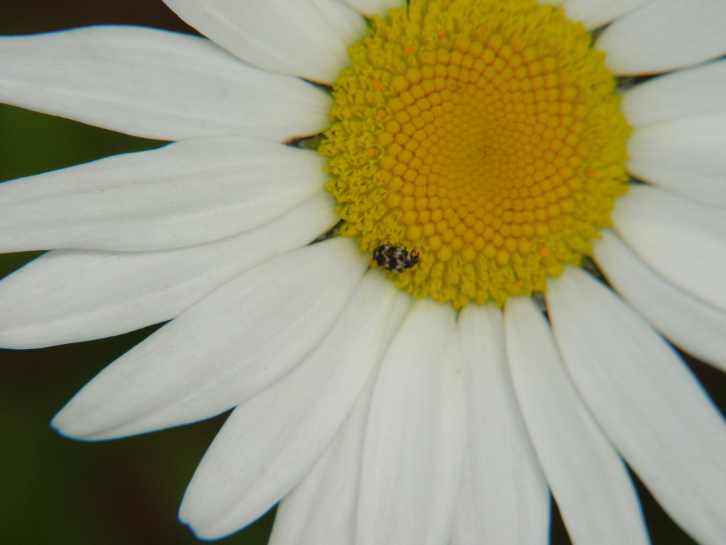 a ladybug on a flower you can't see